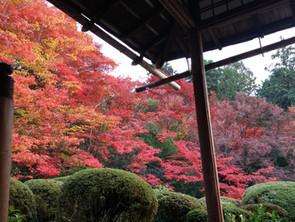 京都で紅葉を
