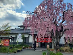 in熊本県①