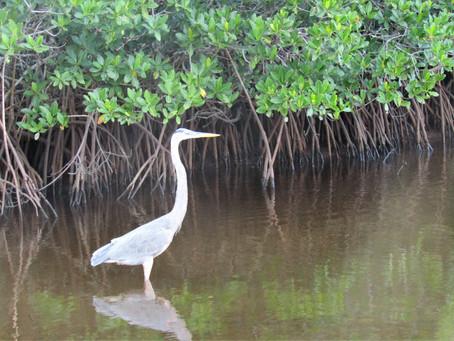 My Everglades Adventure