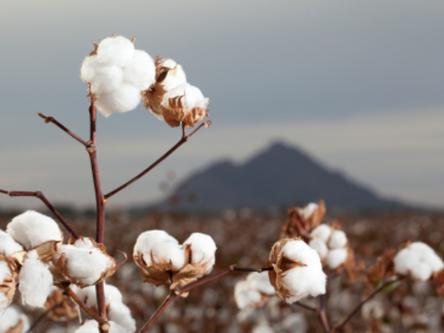 Le coton : la fibre star de nos armoires (2)