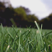 Grass Close Up