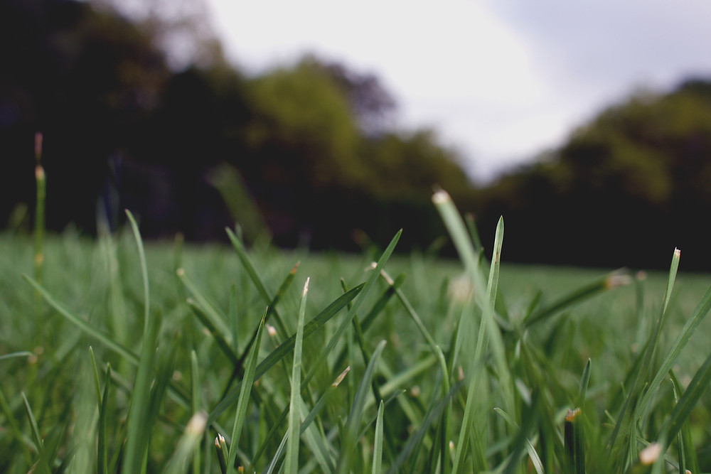 Up close of grass
