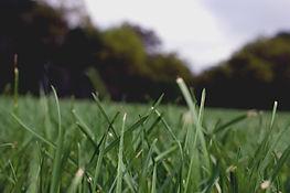 Grass-Close-Up-E-D-Landscaping-LLC-Testimonials-Page-Banner