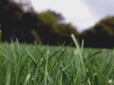 Lawn Mower in Salisbury
