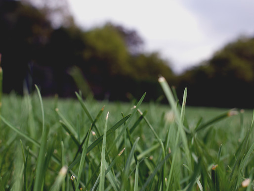 The Grass May Be Greener—Because It's Fake Grass