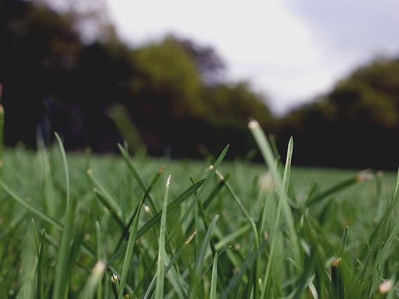 地域と地域を結ぶグリーンレポート