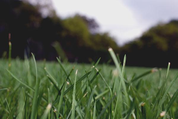 Grass Close Up