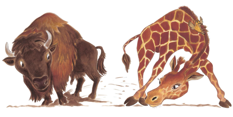 Le bison et la girafe