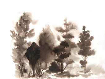 Shadow Tree Studies