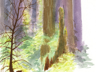 Forest study