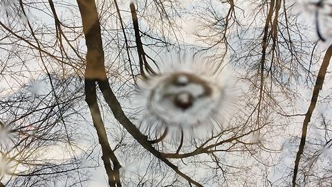 treesbubblesfrogripplestrees_screenshot.