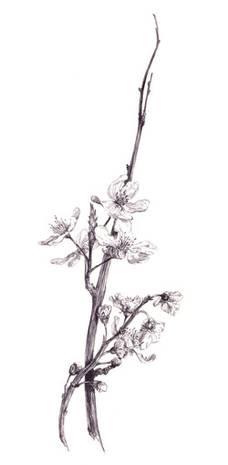 Standing Blossoms