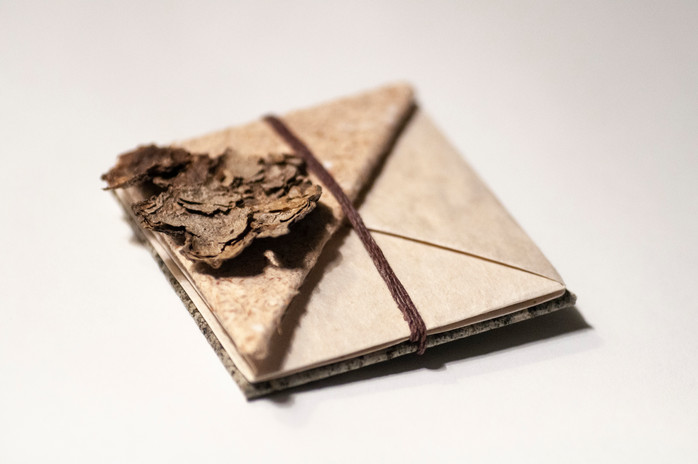 Snail Book Cover