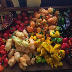 peppers from the G.jpg