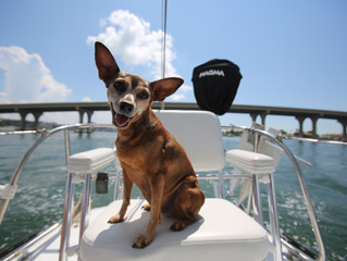Pets Onboard: It's a Dog's (or Cat's) Life