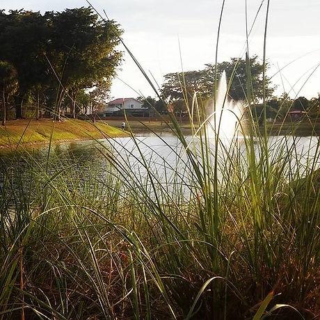 _ the lake