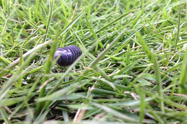 人工芝でお庭の虫が減る?増える?