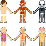 body-anatomy-for-kids-vector-6509963.jpg