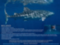 Ningaloo Reef 2020.002.jpeg
