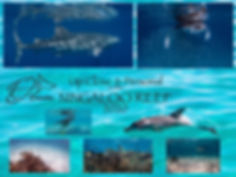 Ningaloo Reef 2020.001.jpeg