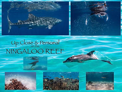 Ningaloo Reef 2019.001.jpeg