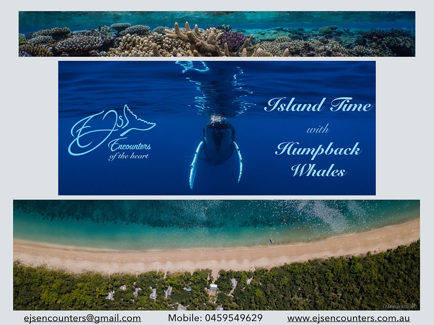 ALL 2020 Island Time with Humpback Whale