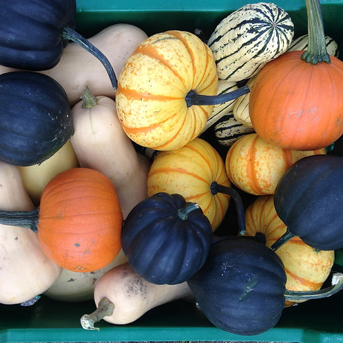 Winter Squash , Eli's Homestead