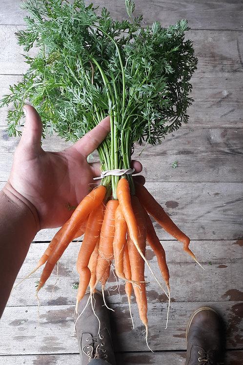Carrots , Chirp Creek Farm