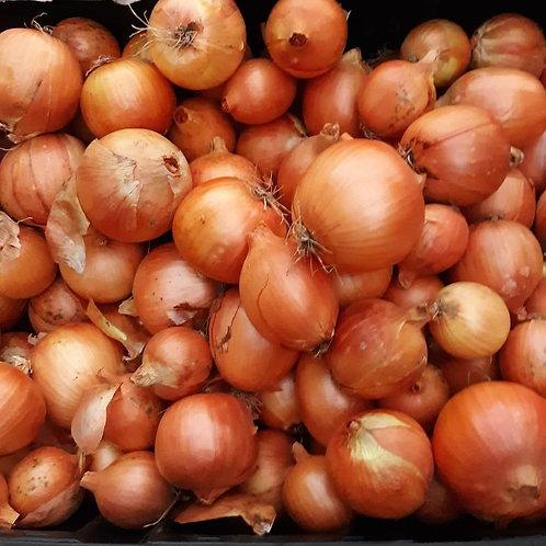 Onions , Eli's Homestead