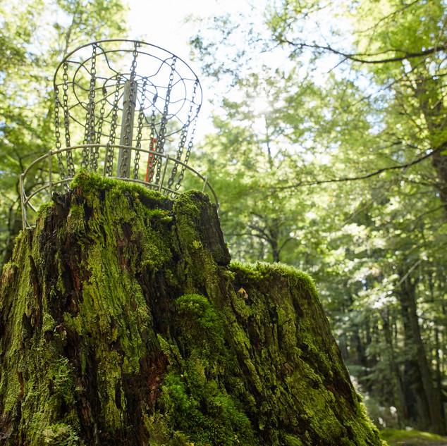 'Mossy Stump'