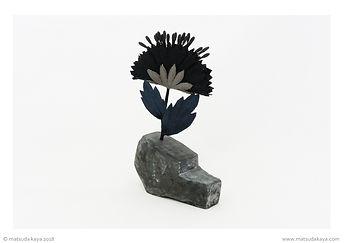 Fleur noire plate