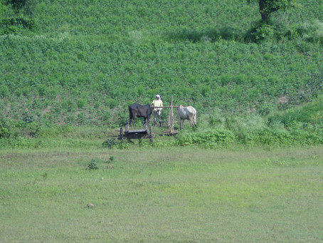 MPA FARMING