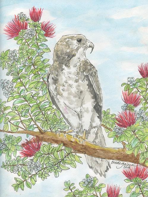 'Io, Native Hawaiian Hawk in an 'Ōhi'a Tree