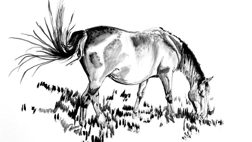"""""""In Foal"""""""