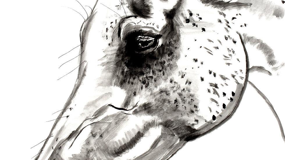"""""""Inked Arabian"""""""
