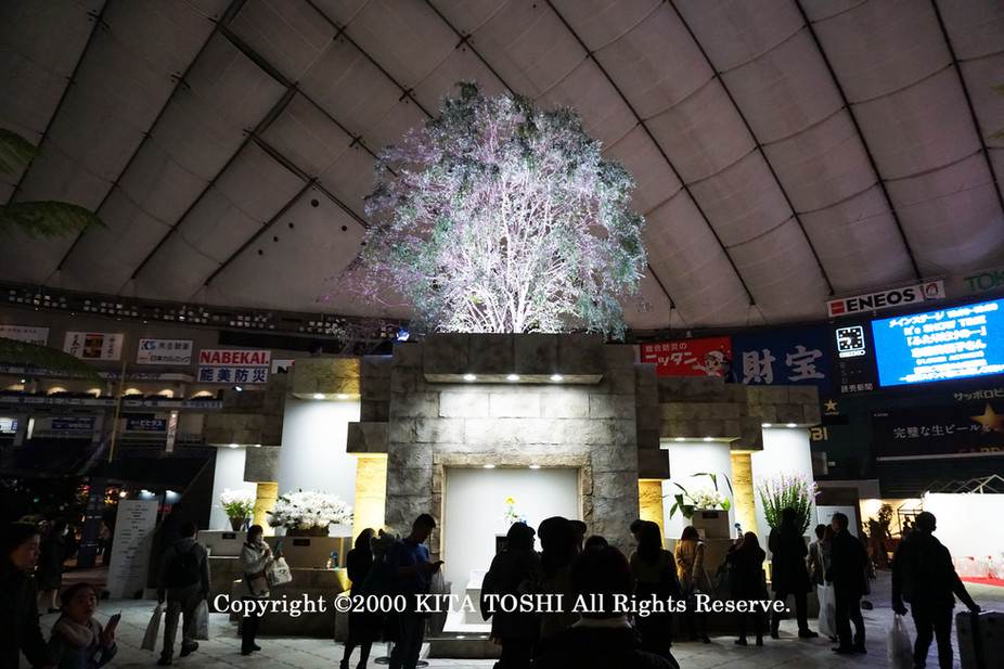 ライトアップ照明デザイナーのKITA TOSHI作品No,19-DoM5
