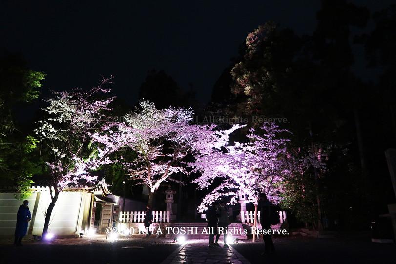 Temple Light-up Designer work Ci21-7 KITA TOSHI