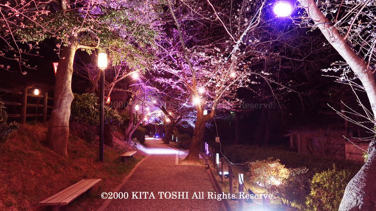 Light-up designer KITA TOSHI's design work Okz-Sakura3 (lighting designer)