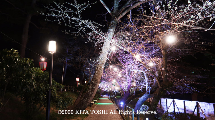 Light-up designer KITA TOSHI's design work Okz-Sakura8 (lighting designer)