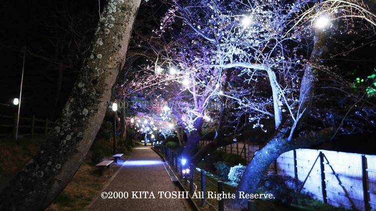 Light-up designer KITA TOSHI's design work Okz-Sakura7 (lighting designer)