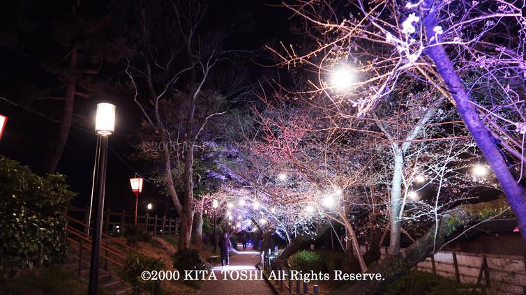 Light-up designer KITA TOSHI's design work Okz-Sakura9 (lighting designer)