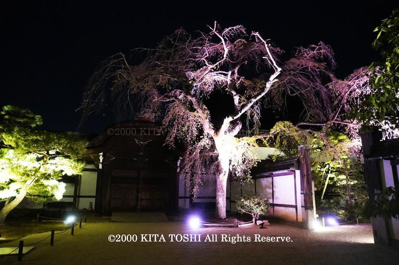Temple Light-up Designer work Ci21-12 KITA TOSHI