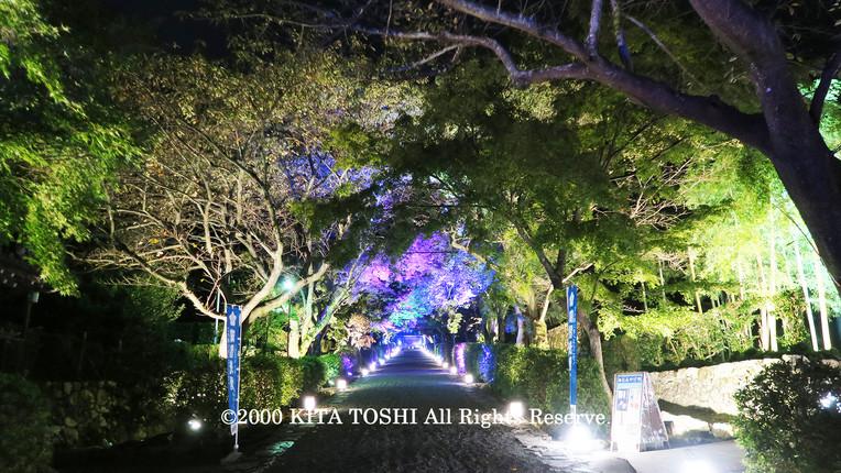 2000_LightupDesignB19_KITATOSHI