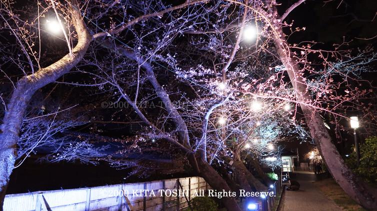 Light-up designer KITA TOSHI's design work Okz-Sakura10 (lighting designer)
