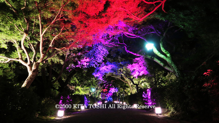 2000_LightupDesignB5_KITATOSHI