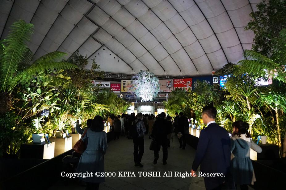 ライトアップ照明デザイナーのKITA TOSHI作品No,19-DoM4