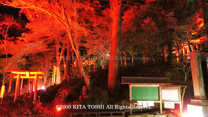 2000_LightupDesigner-Y14_KITATOSHI.jpg