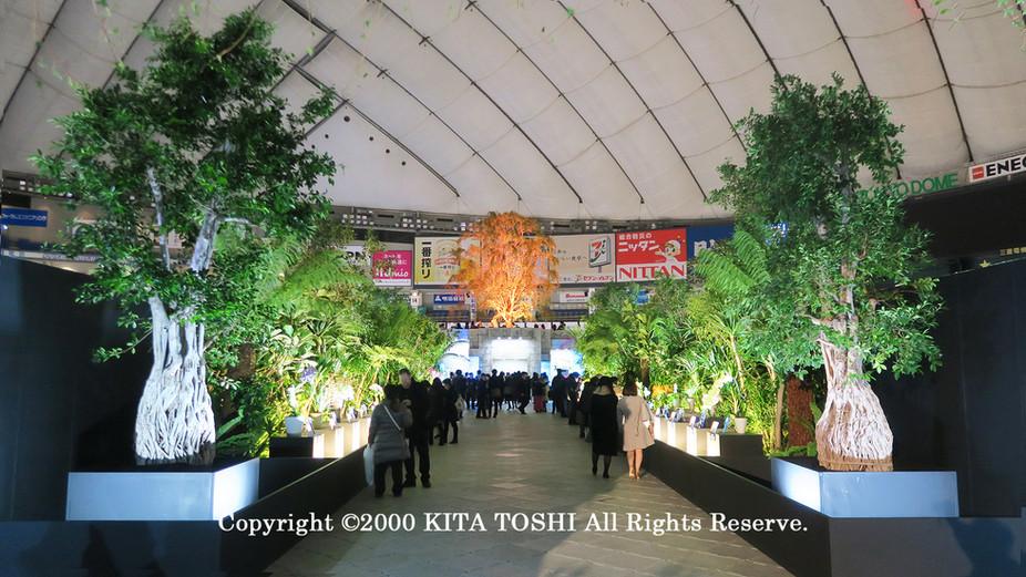 ライトアップ照明デザイナーのKITA TOSHI作品No,19-DoM1