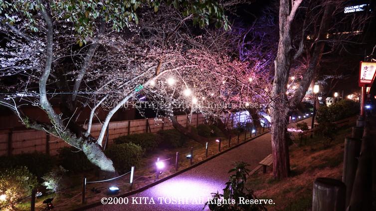 Light-up designer KITA TOSHI's design work Okz-Sakura5 (lighting designer)