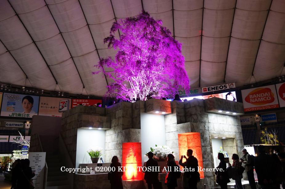 ライトアップ照明デザイナーのKITA TOSHI作品No,19-DoM7